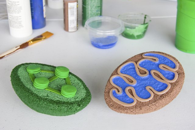How to build a 3d model for cell biology projects mitochondria