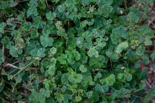 How to use borax to kill weeds with pictures ehow for Detruire mauvaises herbes ecologiquement