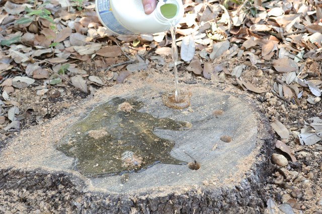 Tree Stump Killer How to Use Bleac...