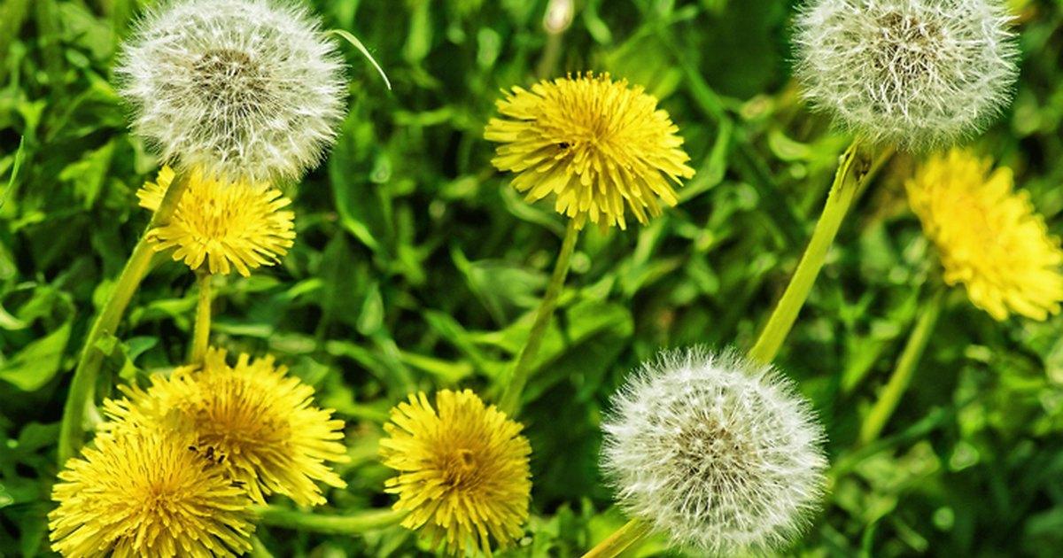 9 plantas comestibles y con propiedades medicinales que no for Planta decorativa con propiedades medicinales crucigrama