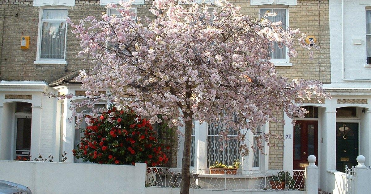 Terrace Garden Ideas EHow UK