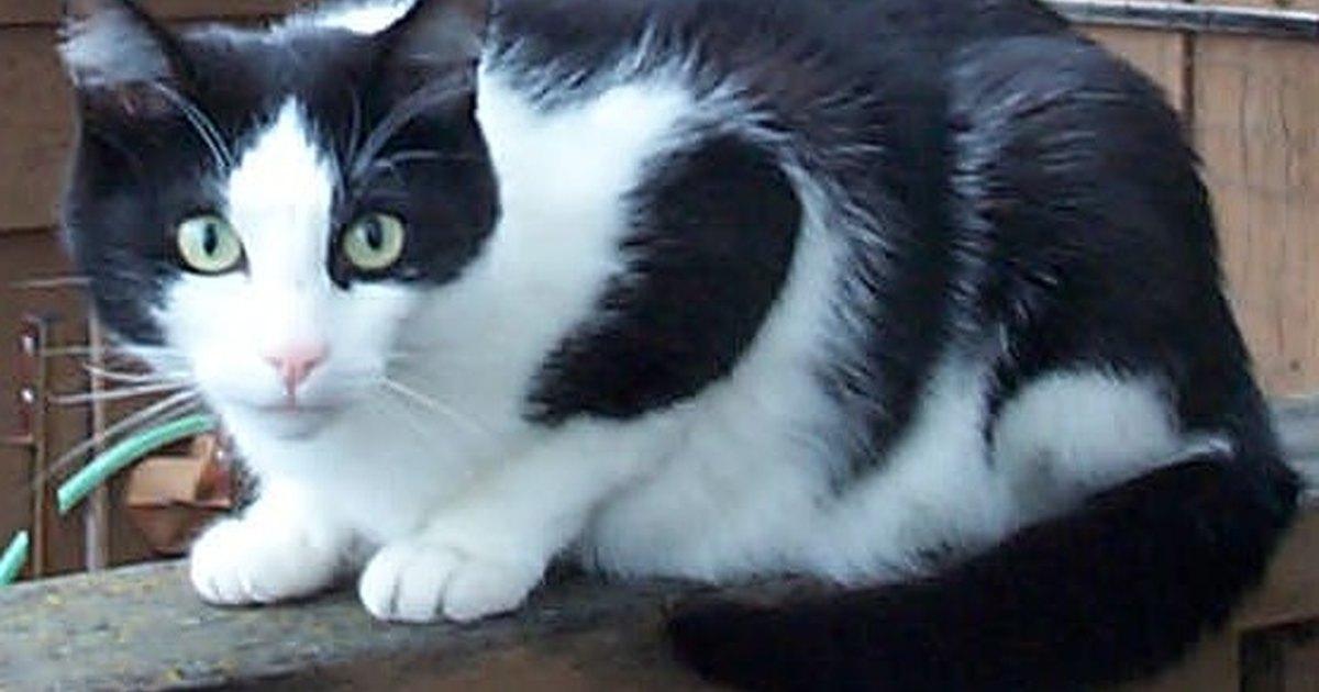 C mo mantener a los gatos extra os alejados ehow en espa ol for Como evitar los gatos en el jardin