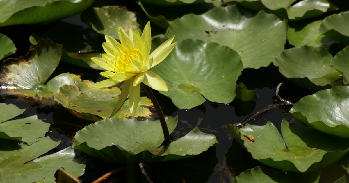 Hazlo tu mismo filtro biol gico para estanque ehow en for Filtro para estanque pequeno