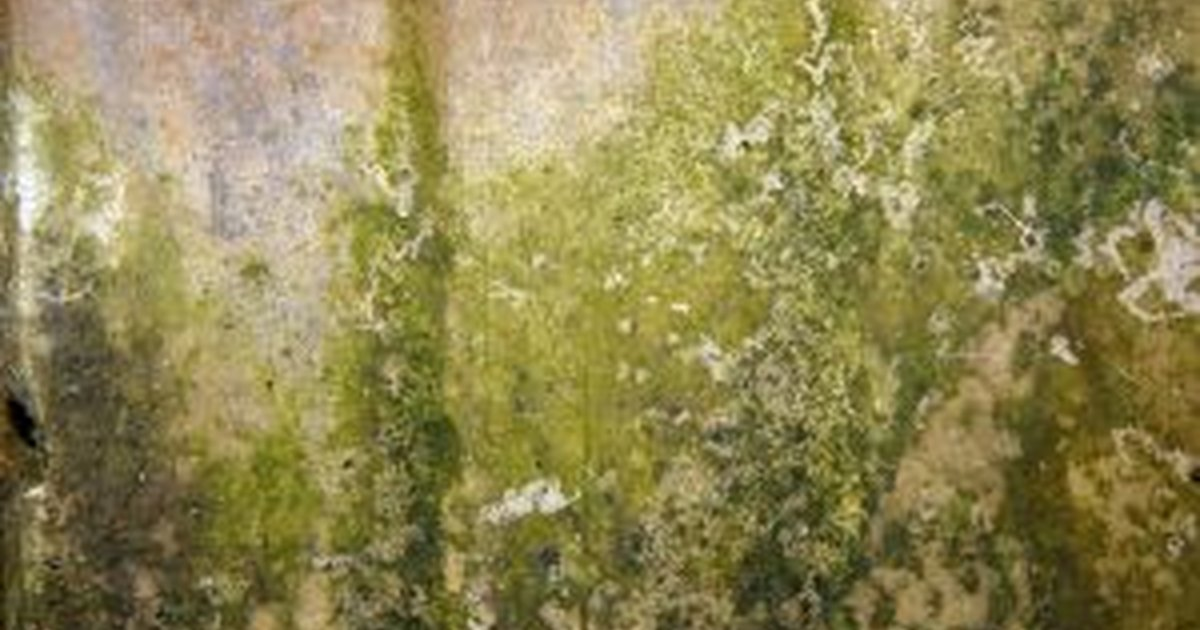 How To Get Rid Of Mold Or Mildew Ehow Uk