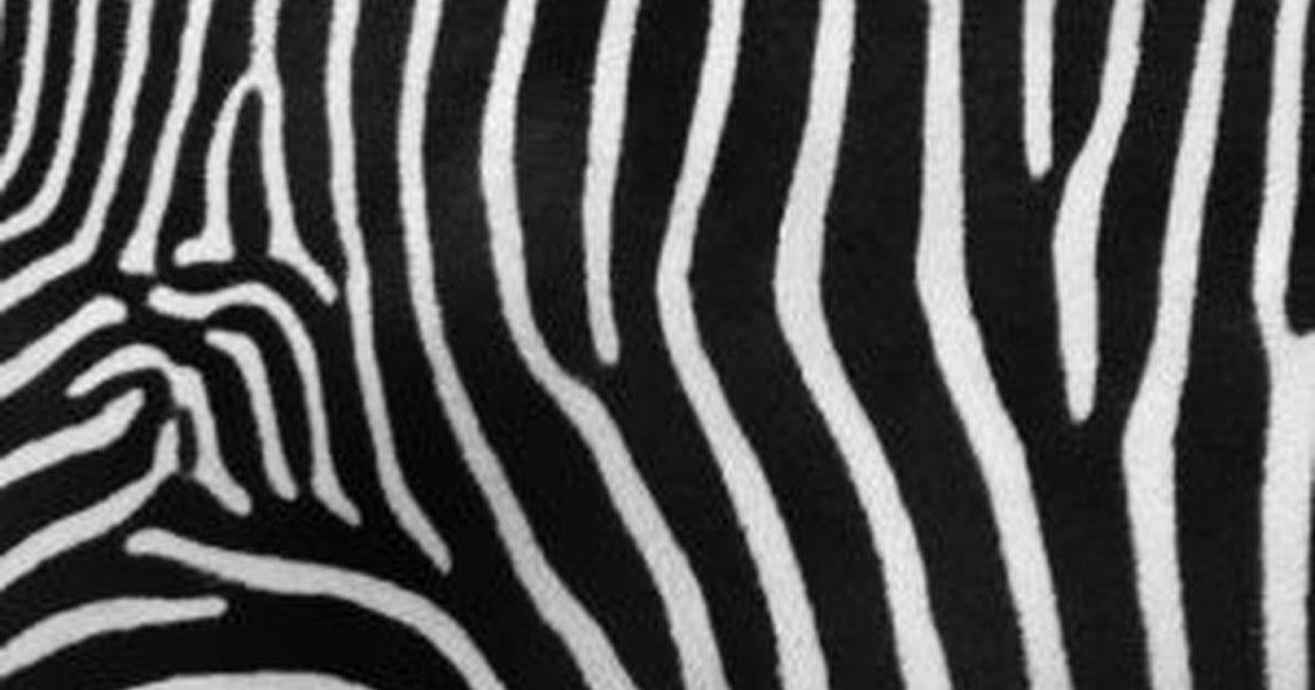 Where Can I Find Zebra Print Wallpaper Borders Ehow Uk