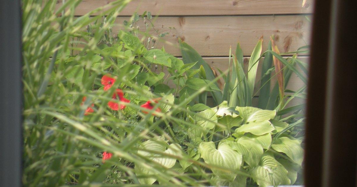 plants for raised flower beds ehow tattoo design bild