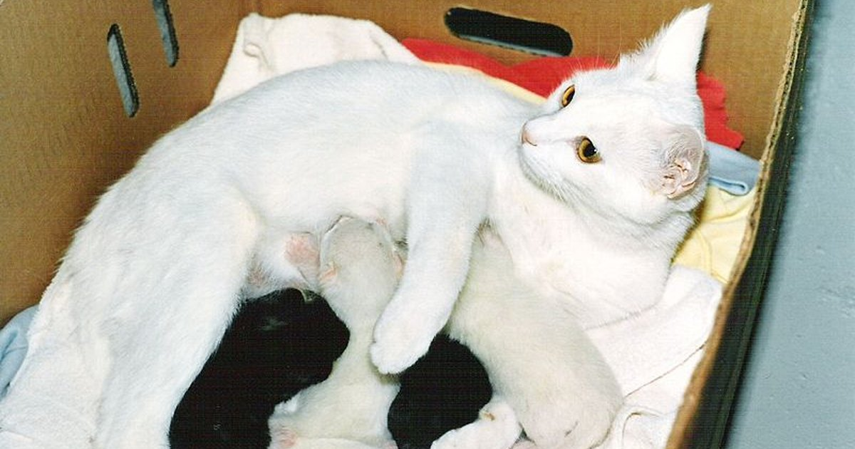How Many Months Are Cats Pregnant 114