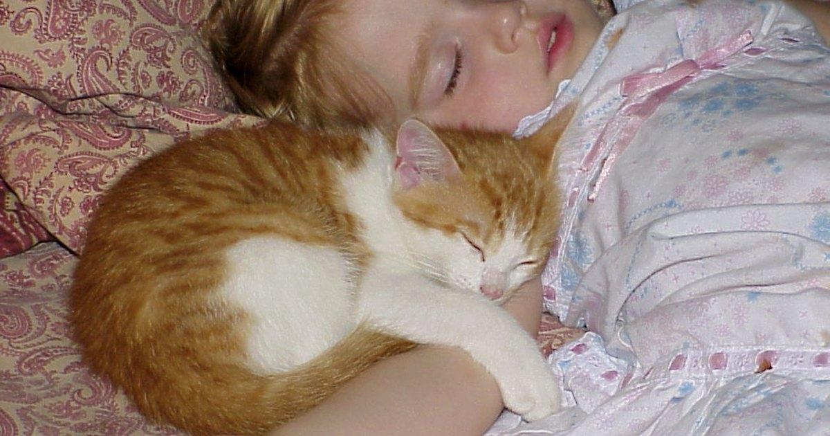 Cat Allergies In Babies Ehow Uk