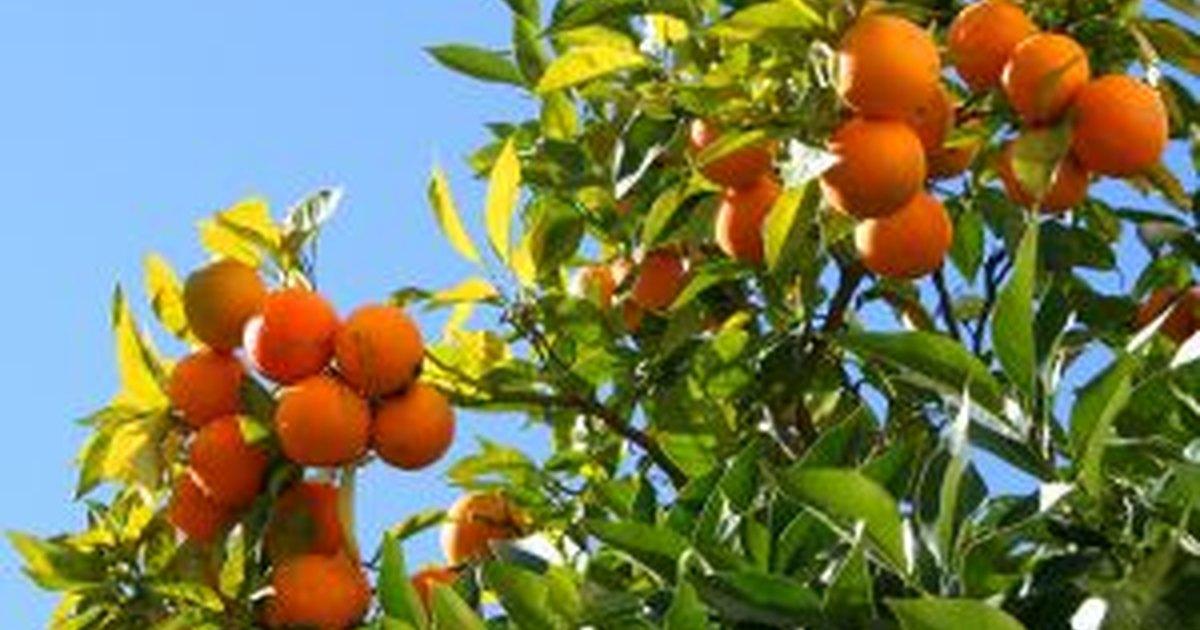 how to identify fruit trees ehow uk