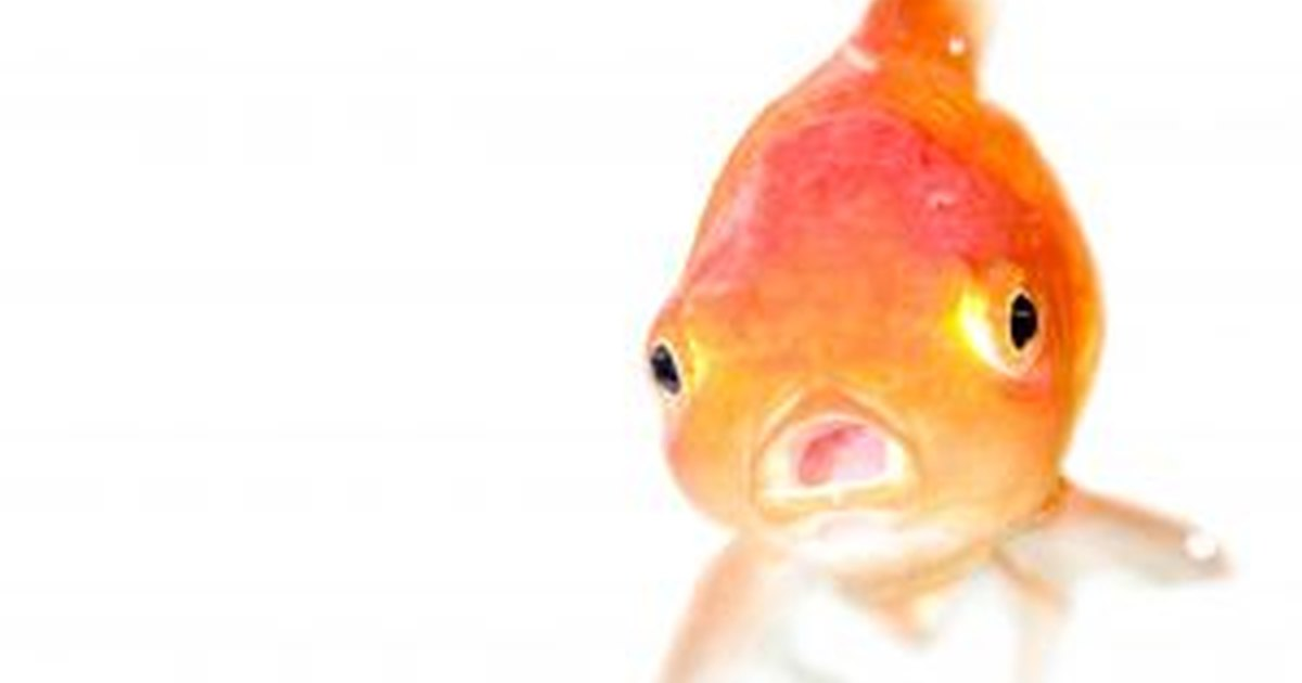 How to keep a goldfish tank clean ehow uk for How to keep fish tank clean without changing water