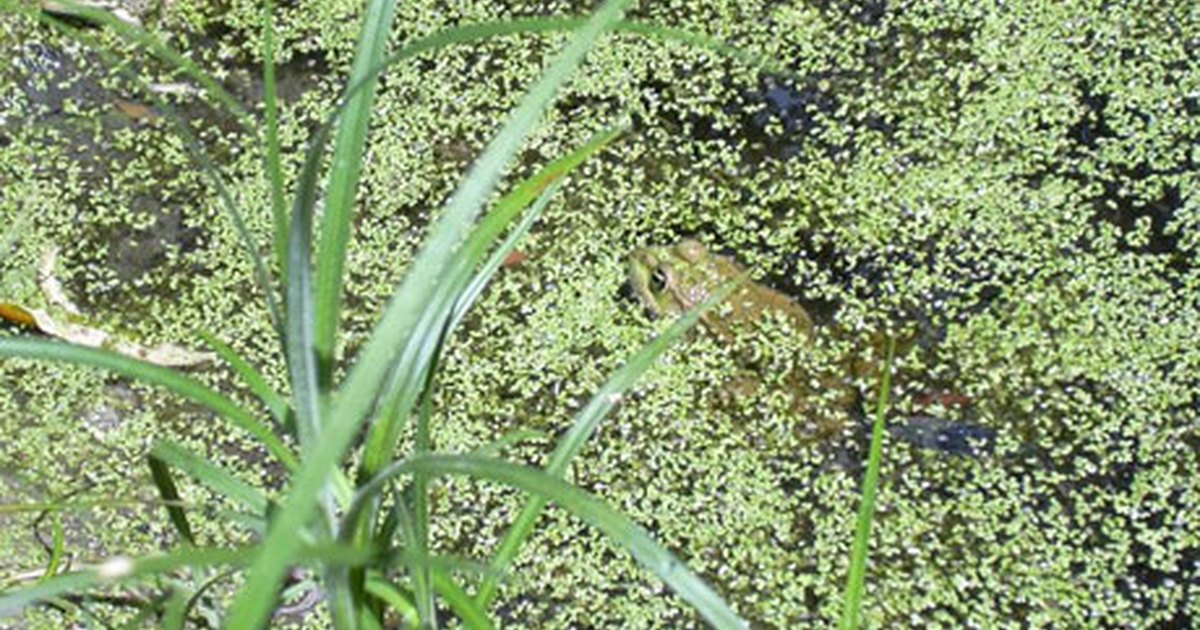 How to keep frogs out of my fish pond ehow uk for Koi pond keeping