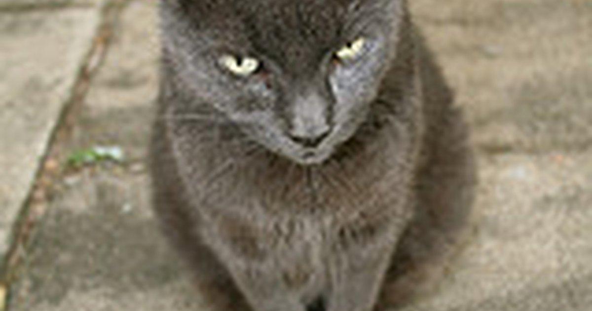 cat ear mites remedy