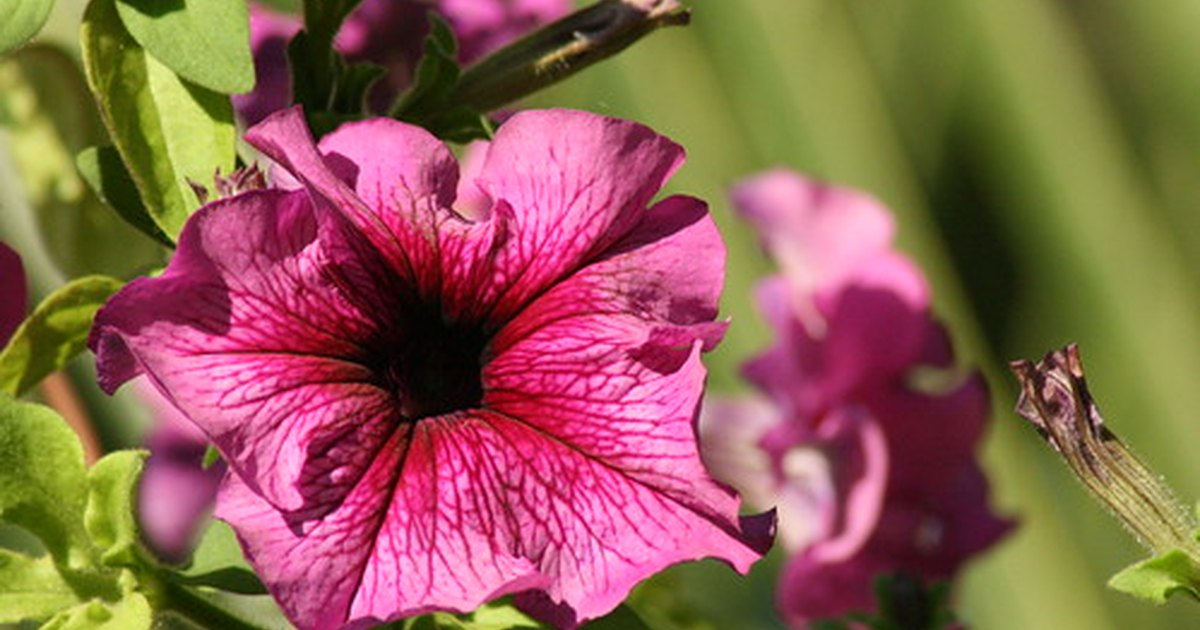What Outdoor Hanging Flowering Plants Can Handle Full Sun