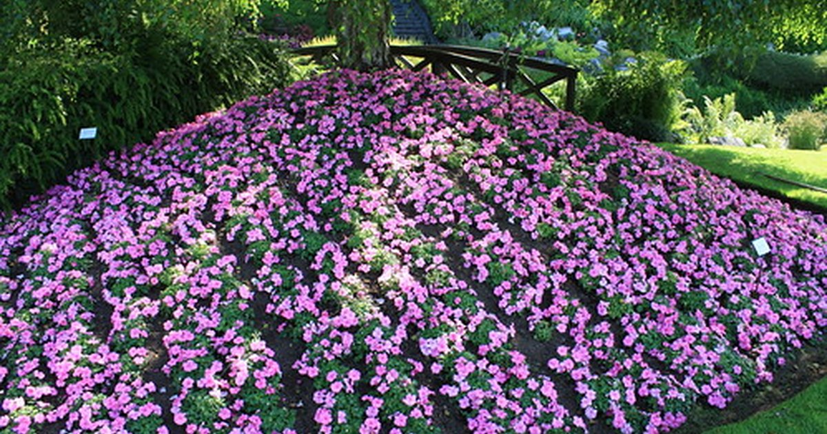 Types Of Impatiens Flowers Ehow Uk