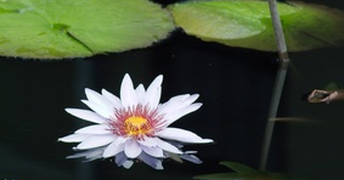 Top fin pond plants ehow uk for Artificial plants for outdoor ponds