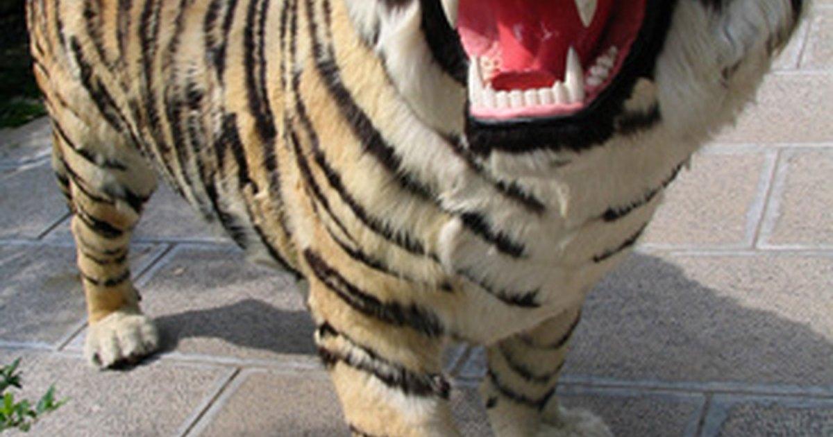 How To Make Fiberglass Life Size Animals Ehow Uk