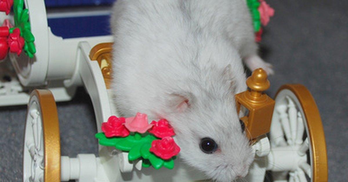 Make Homemade Hamster Toys 87