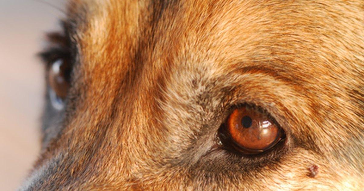 dog eye warts