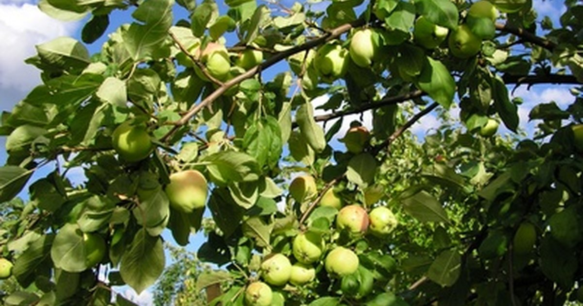 List of Fruit Trees | eHow UK
