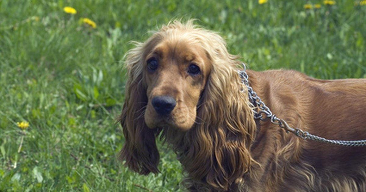Dog Owner S Home Veterinary Handbook