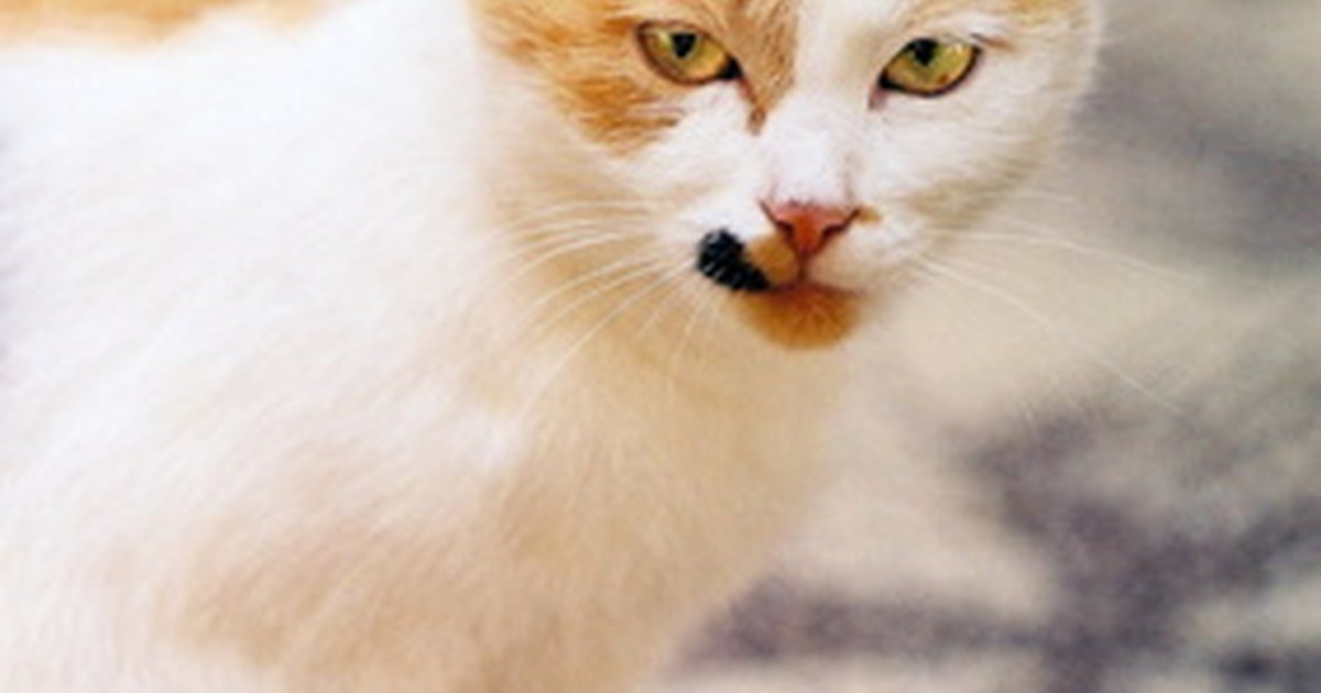 How To Neutralize Cat Urine Ehow Uk