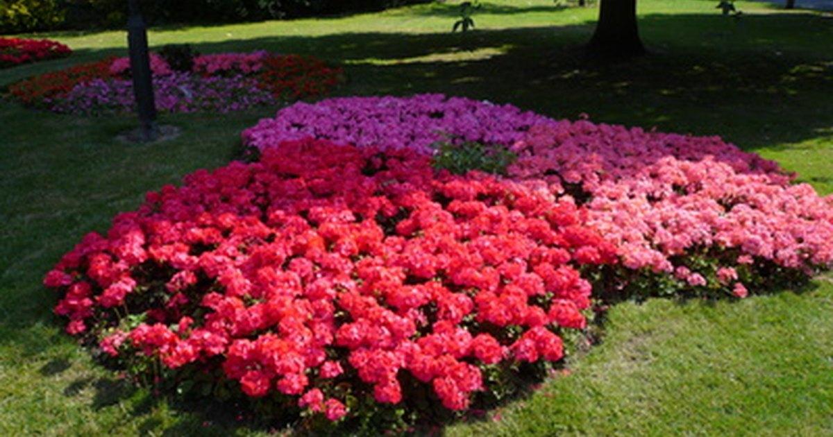 Hardy shade loving plants ehow uk - Shade tolerant flowers ...