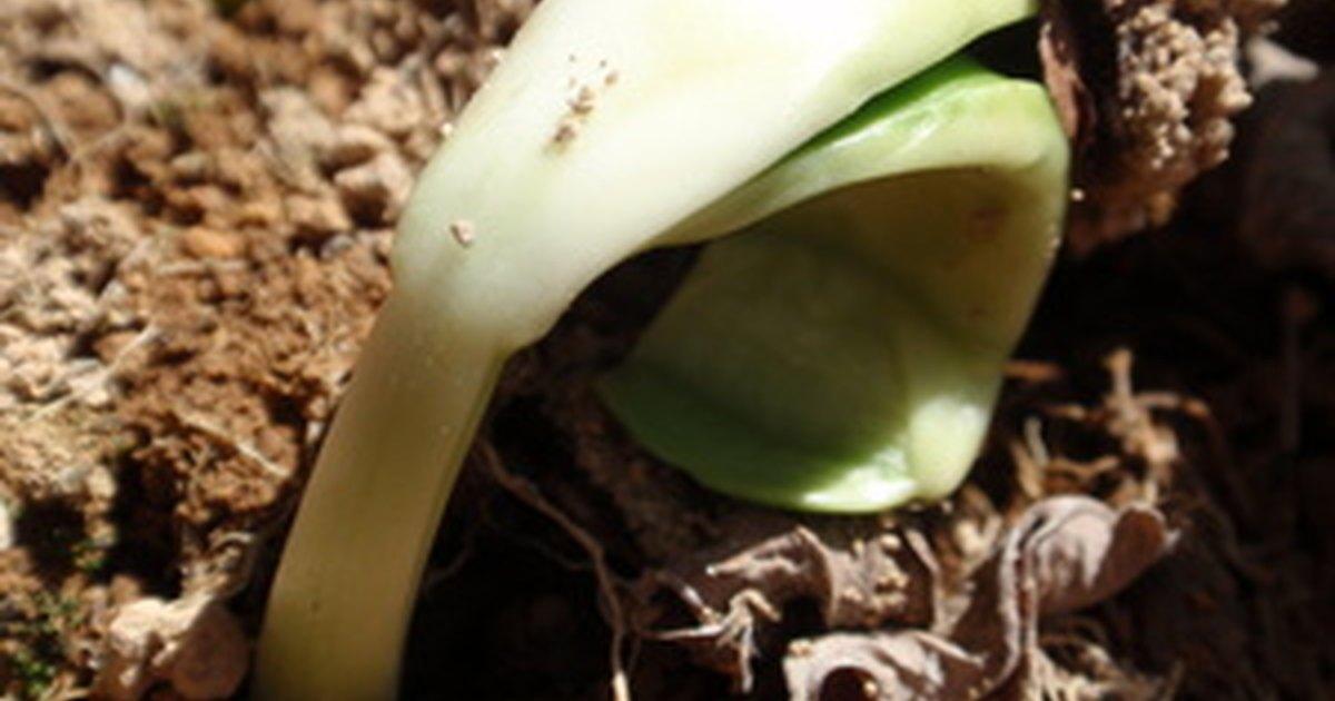 Cu les son las caracter sticas del suelo arcilloso for Cuales son las caracteristicas del suelo