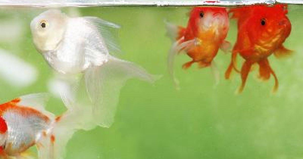 C mo hacer un filtro casero para peces ehow en espa ol for Tanques para peces