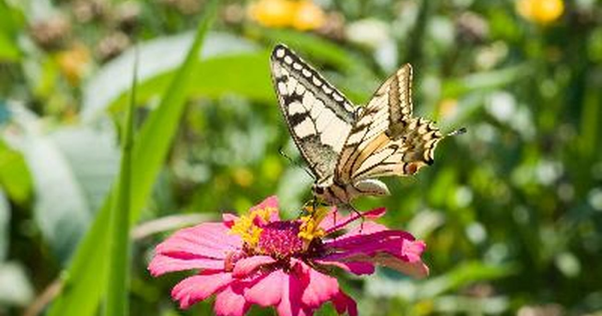 The flowers in season in early september ehow uk for Flowers that are in season