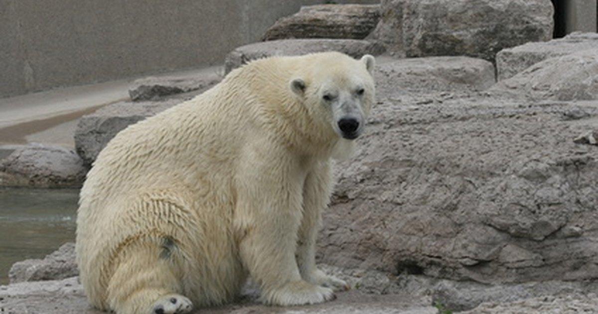 Polar crafts for kids ehow uk