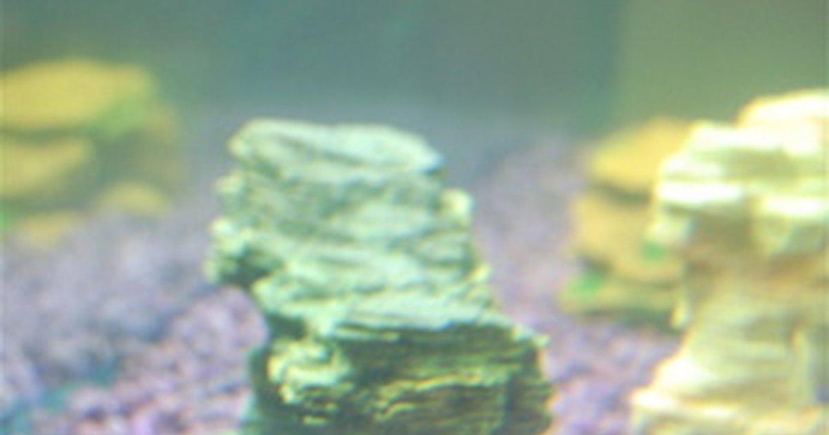 Antibiotics for fish ehow uk for Fish tank antibiotics