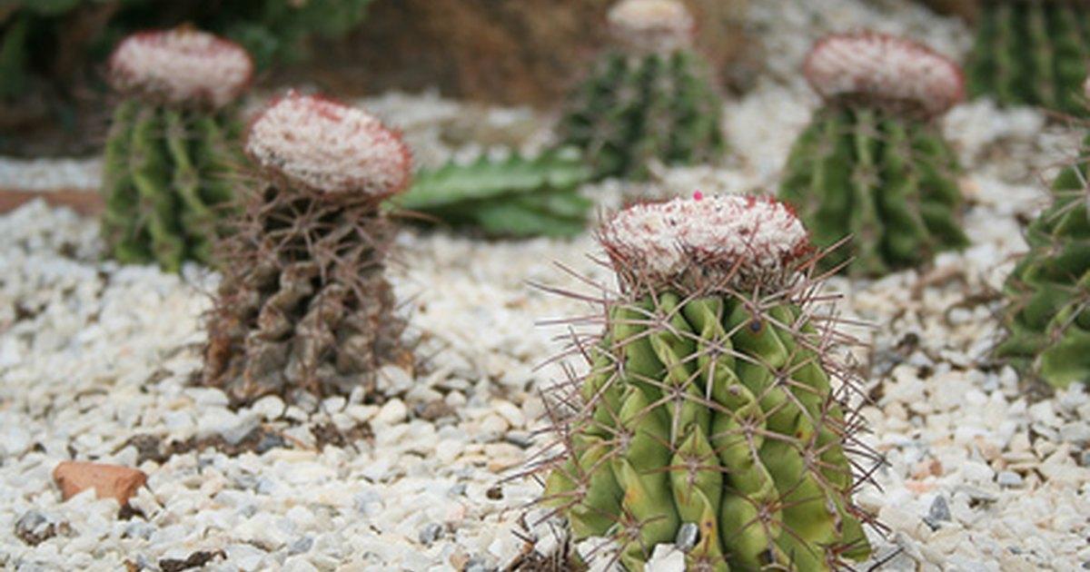 Iluminaci n para plantas y cactus ehow en espa ol - Iluminacion para plantas ...