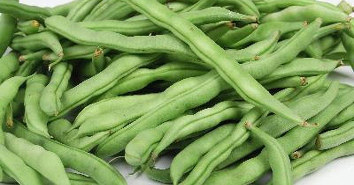 C mo congelar las jud as verdes frescas ehow en espa ol - Como preparar unas judias verdes ...