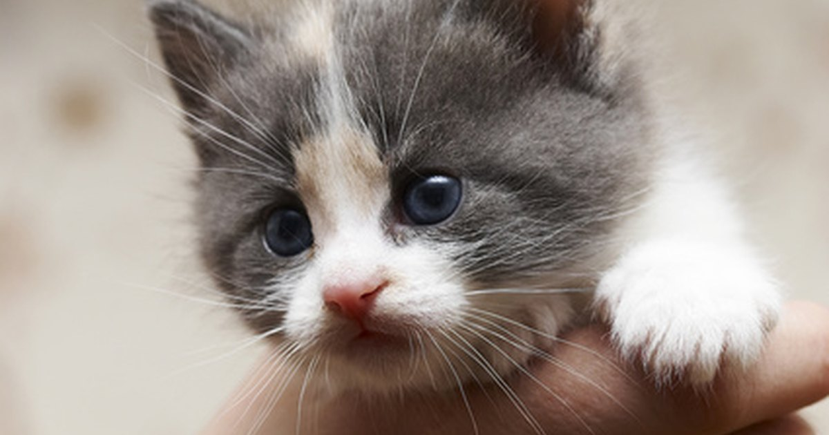 Electronic Tracking Devices For Cats Ehow Uk