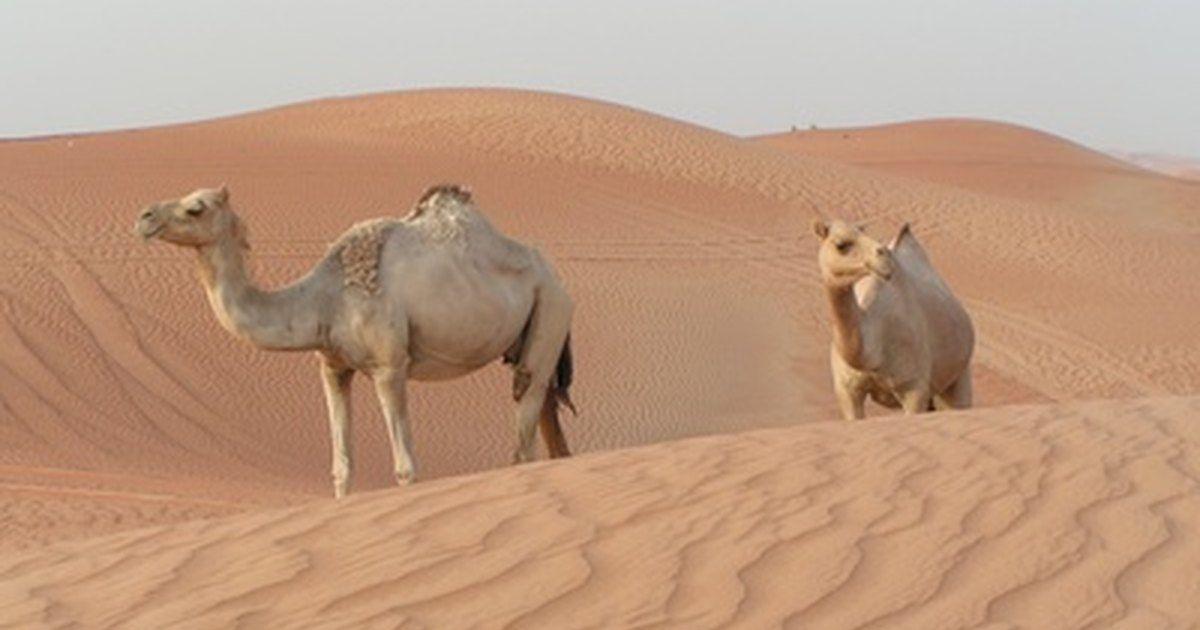 How Are Animals Adapted to Living in the Desert? | eHow UK