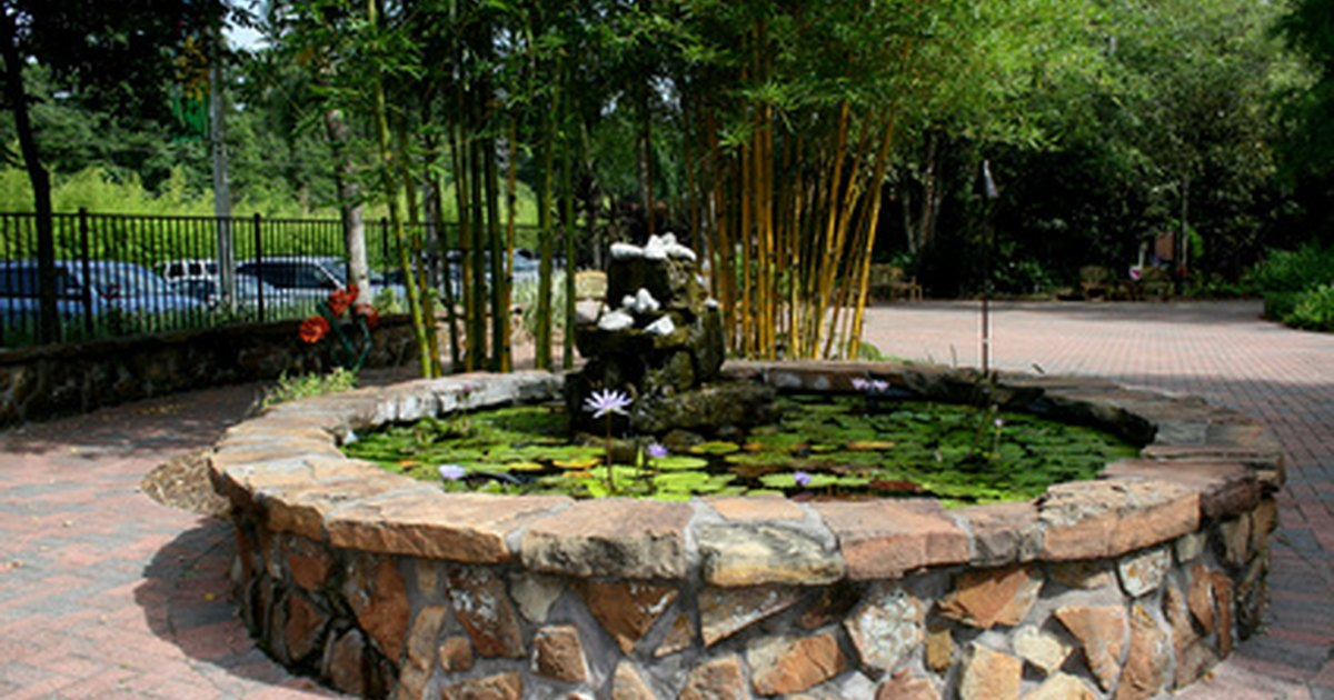 C mo limpiar un estanque de peces ehow en espa ol for Como oxigenar un estanque de peces