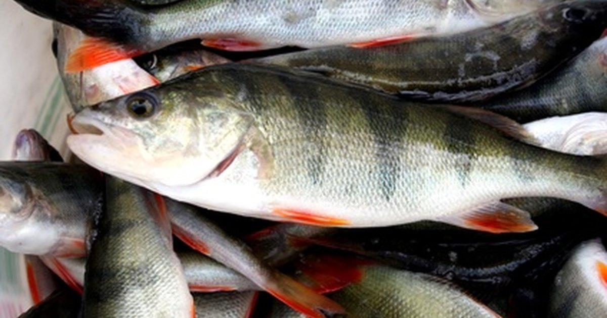Diseases of fish in small ponds lakes ehow uk for Pond fish diseases