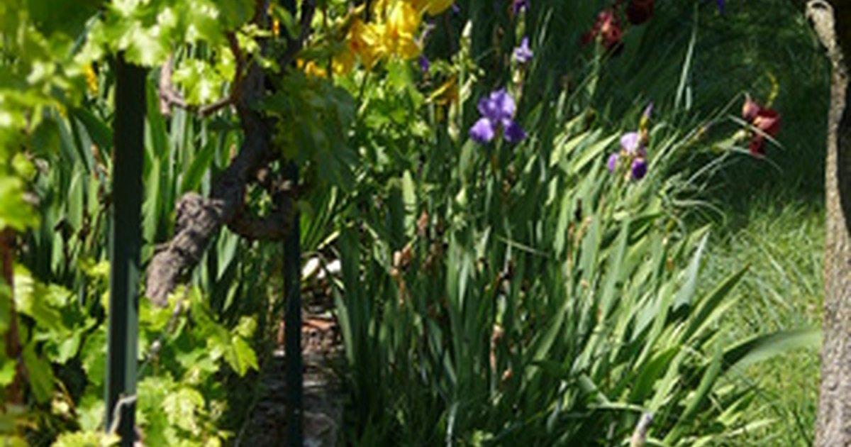 Qu plantas cultivar en un jard n orientado al norte for Jardin que planter en janvier