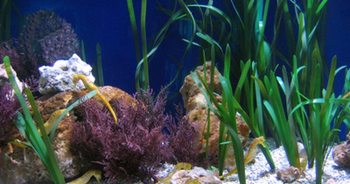 Cu l temperatura es buena para los peces tropicales de for Temperatura para peces tropicales acuario