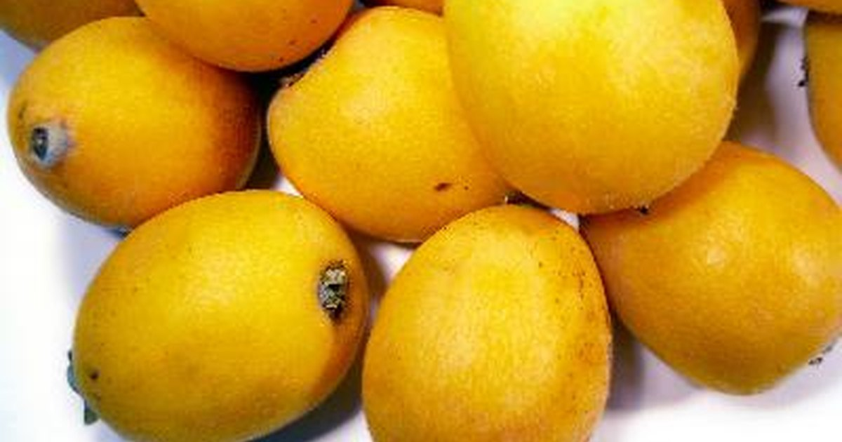 The gallery for --> Yellow Tomatoes Varieties