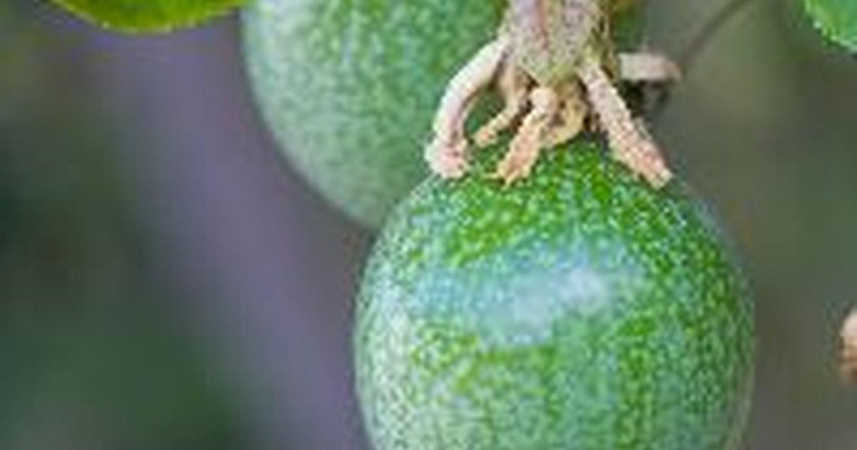 List of Tropical Fruit Vines | eHow UK