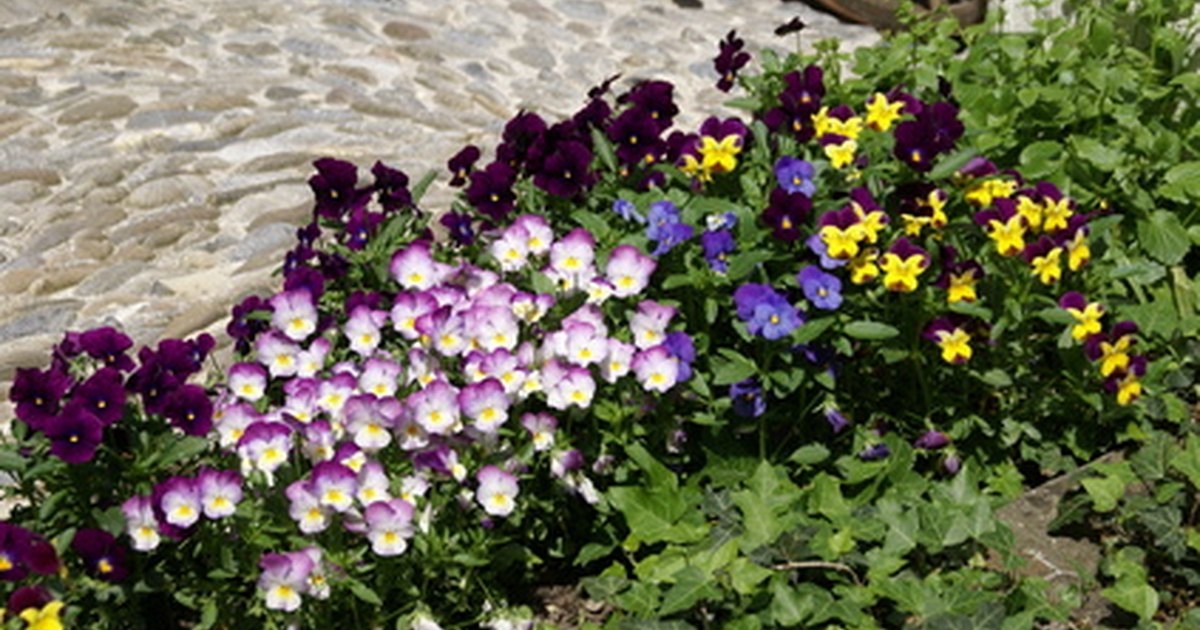 What plants flowers mean friendship ehow uk - Flowers that mean friendship ...
