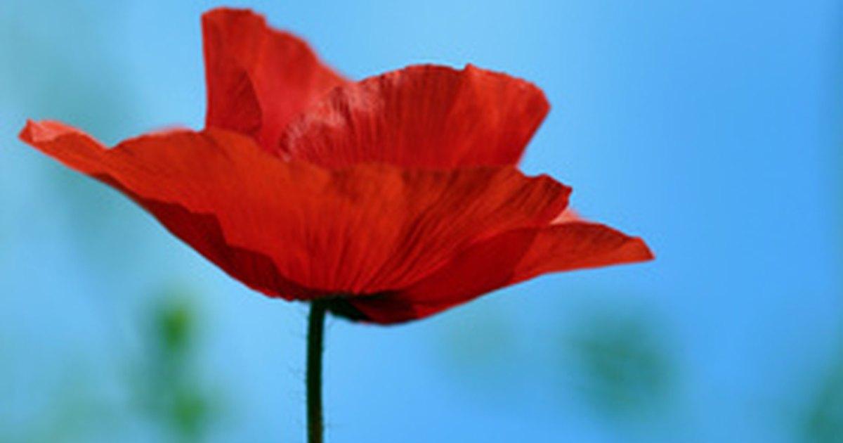 Flowers Native to Poland | eHow UK