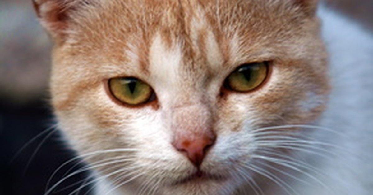 Harmless cat repellent