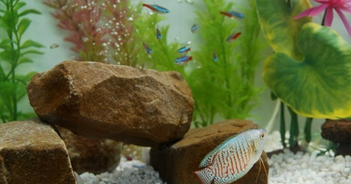 Diseases of tetra fish in aquariums ehow uk for Fungus in fish tank