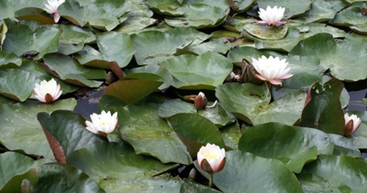 The Best Way To Plant Pond Plants Ehow Uk
