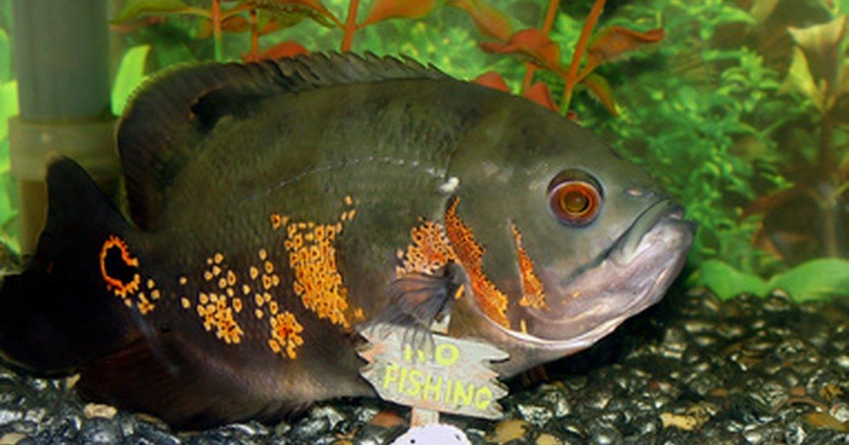 Por qu el agua de mi tanque para peces est turbia for Tanques para peces