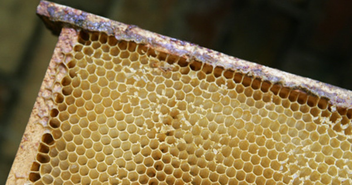 How To Make Honey Oil Using A Homemade Extractor 35