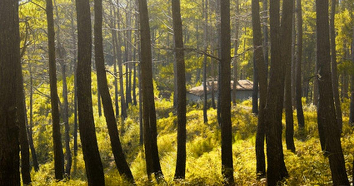 Qu tipos de rboles son de madera dura ehow en espa ol for Lista de arboles perennes