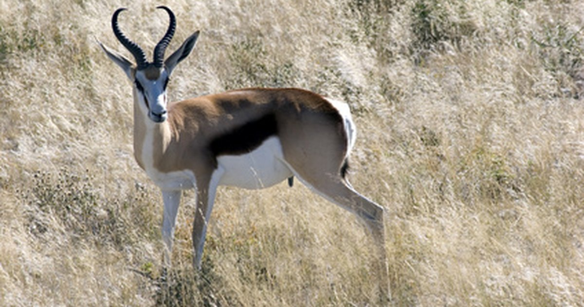 Plants and Animals of the Kalahari Desert | eHow UK  Plants and Anim...